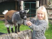 25th Oct 2015 - The Small Breeds Farm Park