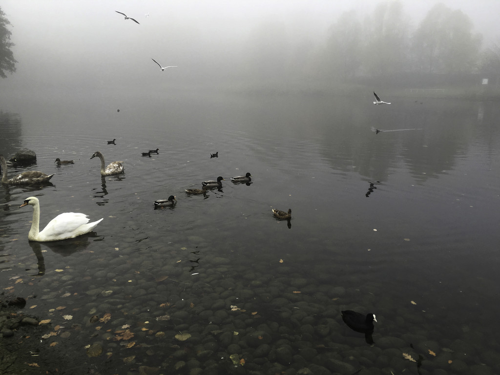 Day 39 - Foggy at Bluewater Lakes - 100happydays2015 by bizziebeeme