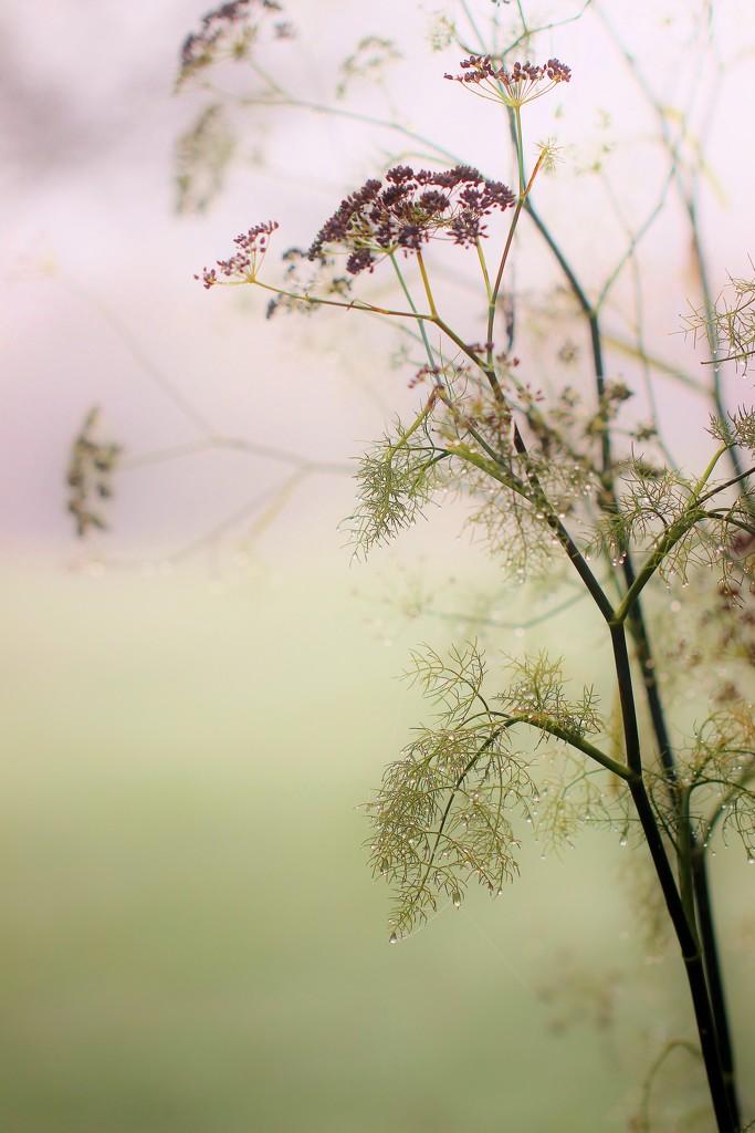 Foggy Day Fennel by motherjane