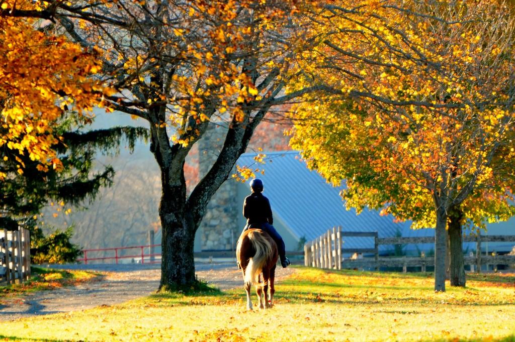 trail ride by dianen