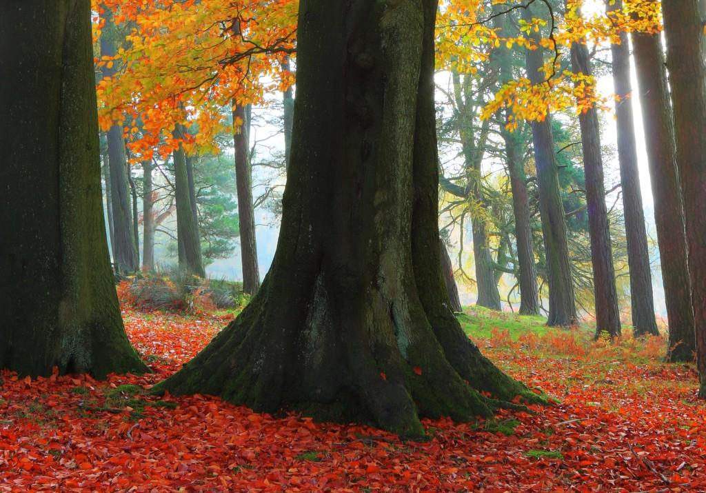 Spooky Woods by shepherdmanswife