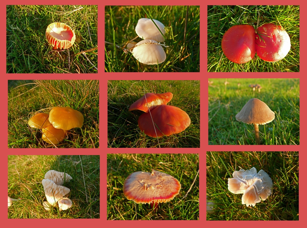 fungi collage by shirleybankfarm