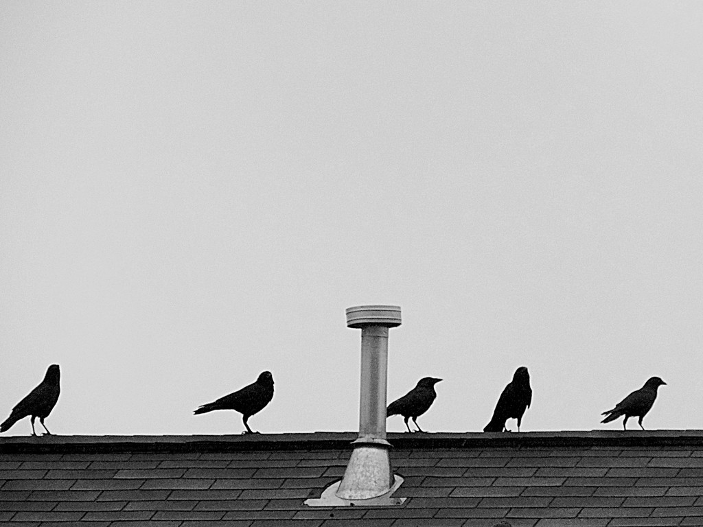 Crows on a Roof by homeschoolmom