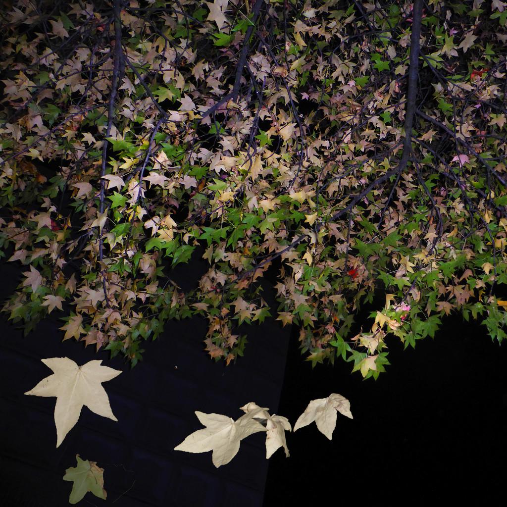 canopy  by helenhall