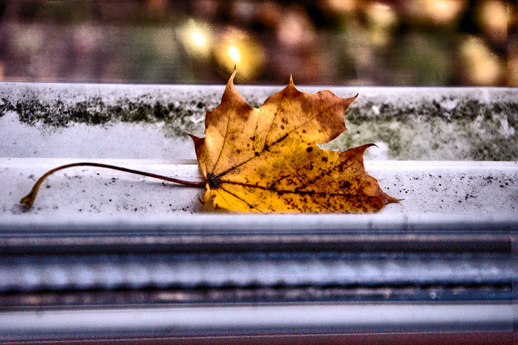 Oh, the loney leaf! by joansmor