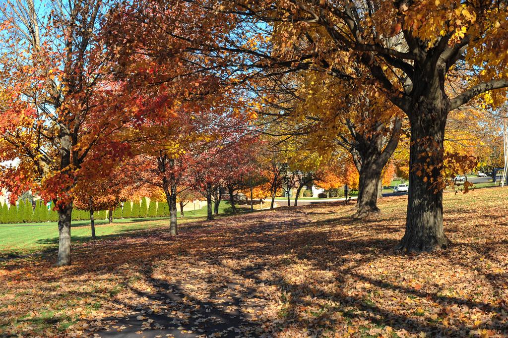 Colors of Autumn 19 by loweygrace