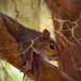 Lazy Squirrel by rickster549