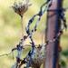 A Little Autumn Rust by genealogygenie