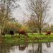Meadow view by barrowlane