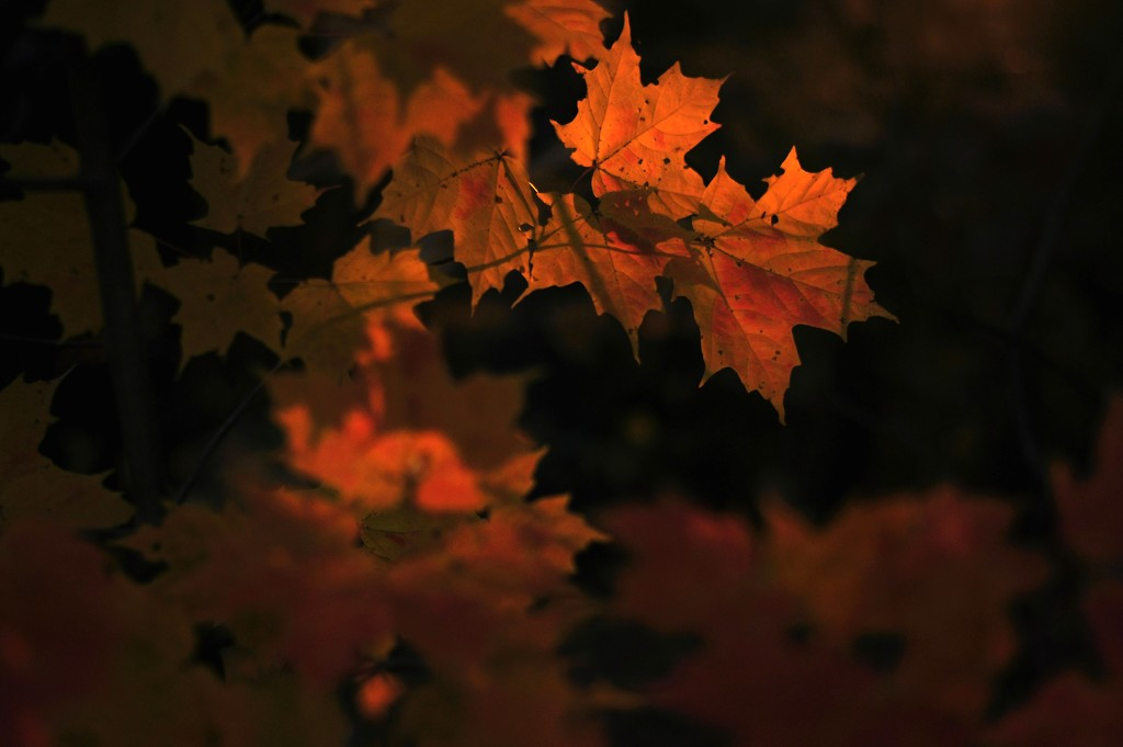 Leaves by dianen
