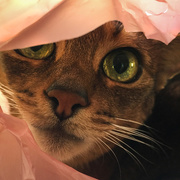 5th Nov 2015 - Pretty in pink
