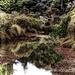 Swamp land by maggiemae
