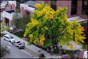26th Oct 2015 - A view of fall from the fourth floor