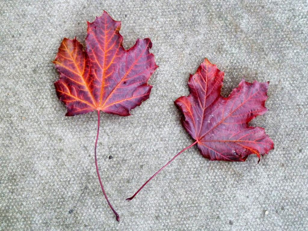 Autumn leaf composition by boxplayer