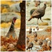 Turkeys on the Beach!! by dianen