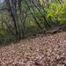 Leaves ready to rake