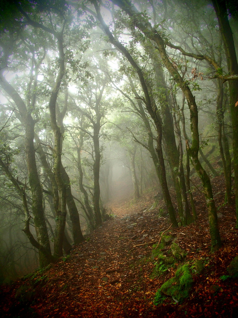Misty in the woods by laroque