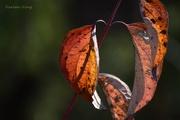 7th Nov 2015 - Remnants of Autumn