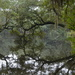 Live oak reflections, Charles Towne Landing State Historic Site, Charleston SC by congaree