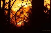 9th Nov 2015 - Kansas Sunset 11-9-15