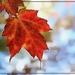 Sam's Week- Leaves 1 by olivetreeann