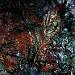 Mulch by rich57