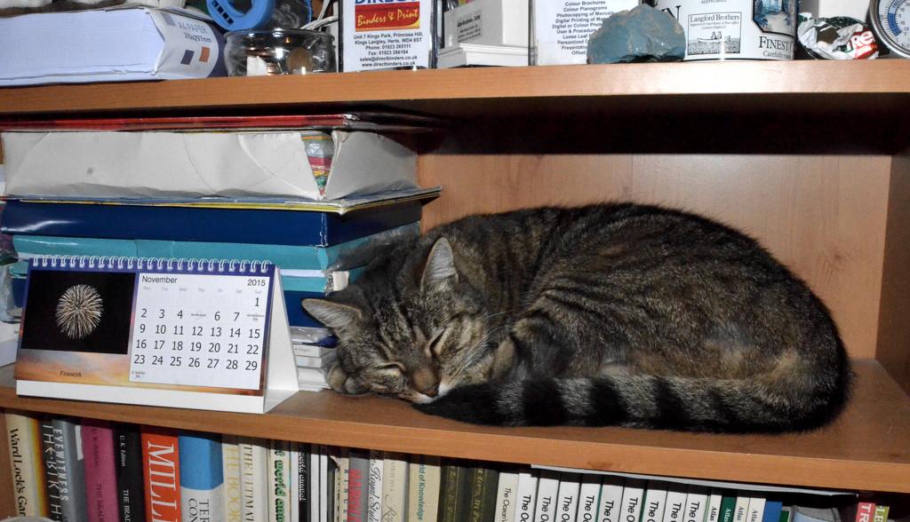 Sleeping Soundly by arkensiel