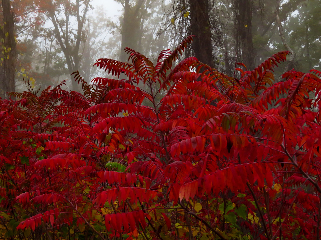 Fog with a Touch of Color by milaniet