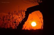 10th Nov 2015 - Kansas Sunset 11-10-15