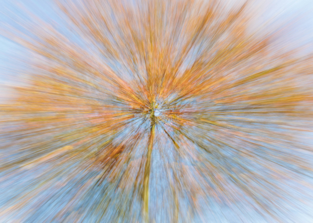 ONS10 - Tree in motion by stiggle