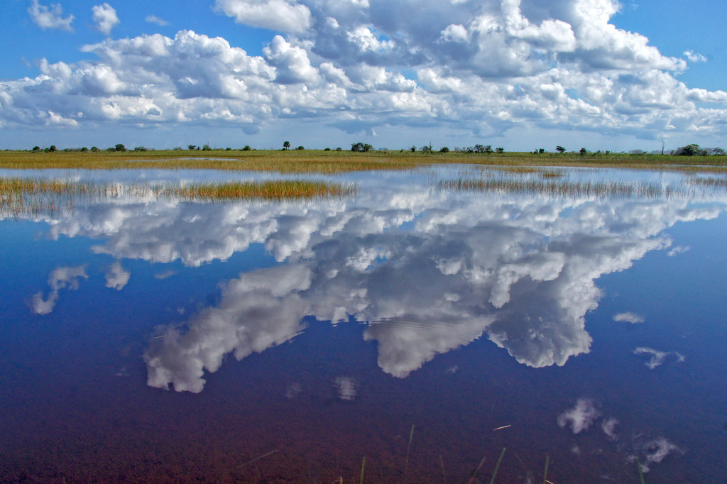Everglades by danette