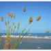 Coastal Bunny Tails..ONS10 by julzmaioro