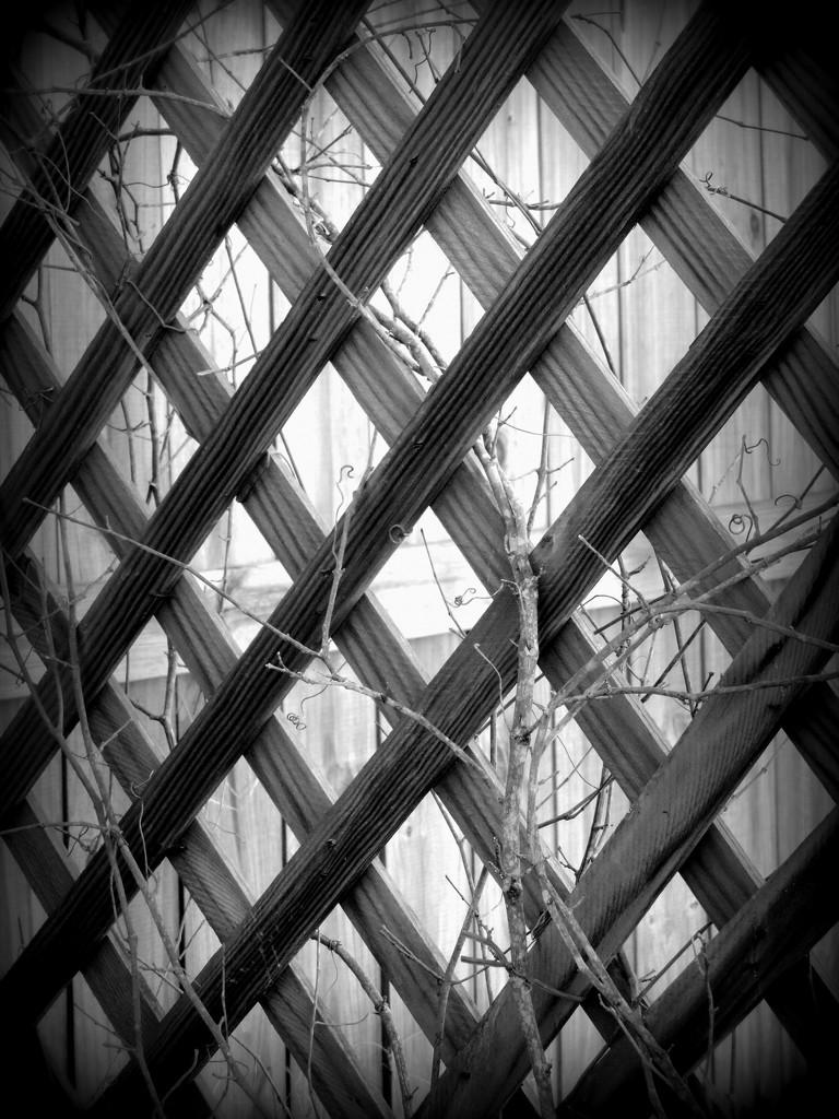 latticework by homeschoolmom