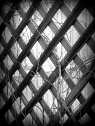 13th Nov 2015 - latticework