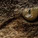 Cats eye