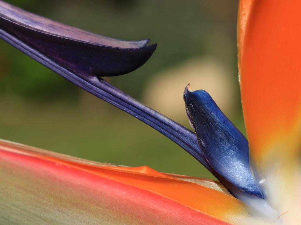 Botanic triangles by kiwinanna