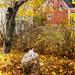 Ubiquitous Nova Scotia Autumn