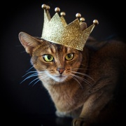 16th Nov 2015 - If cats ruled the world...