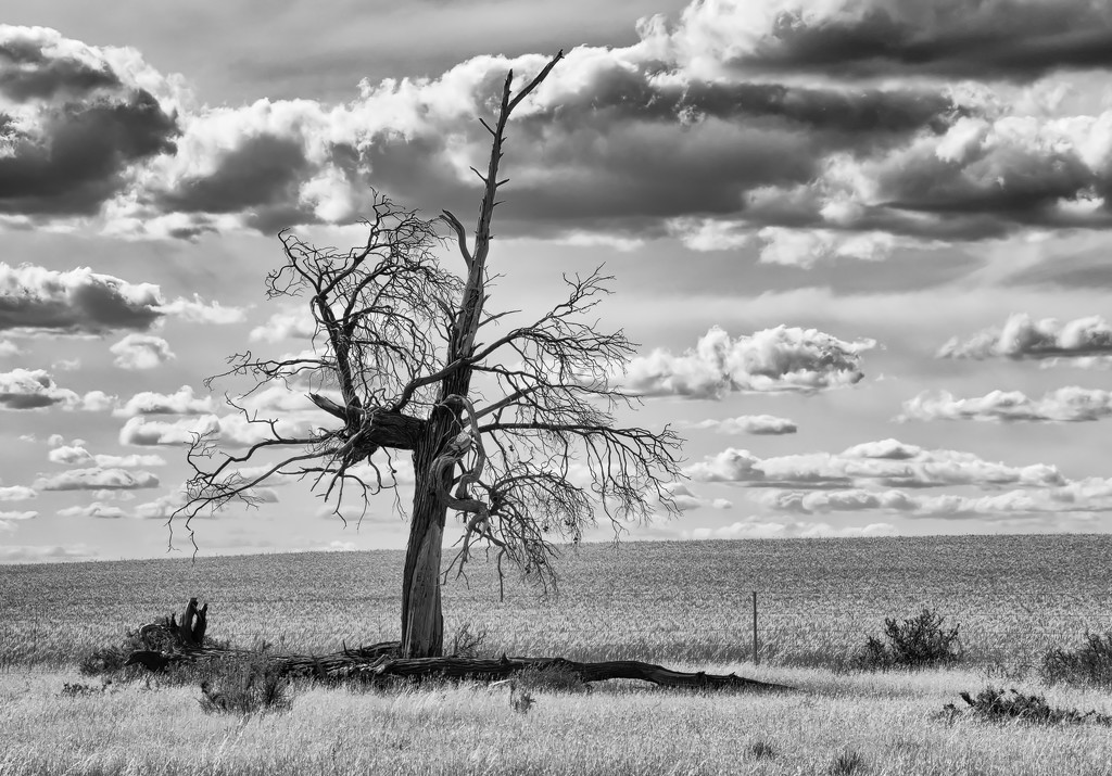 Dead tree by golftragic