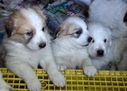 17th Nov 2015 - The Puppies