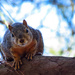 One Confident Squirrel by milaniet