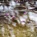 Rain Petals by elatedpixie