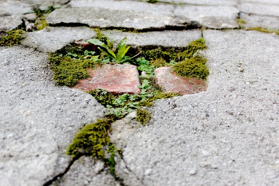 A Crack in the Sidewalk by blackmutts
