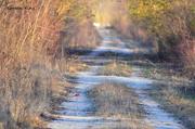 19th Nov 2015 - Cardinal on the Flint Hills Nature Trail