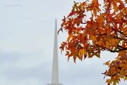 17th Nov 2015 - Church Steeple, Autumn Leaves