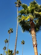 19th Nov 2015 - Sunny winter in Beverly Hills