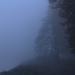 Fog by nanderson