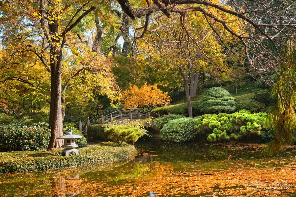 Back at the Gardens by lynne5477