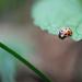November ladybug???? by fayefaye