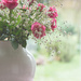 Roses in the jug